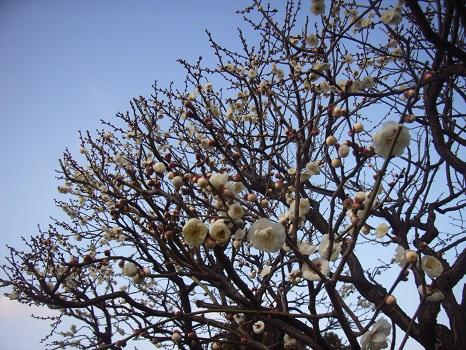 二十四節気の始まり「立春」です。