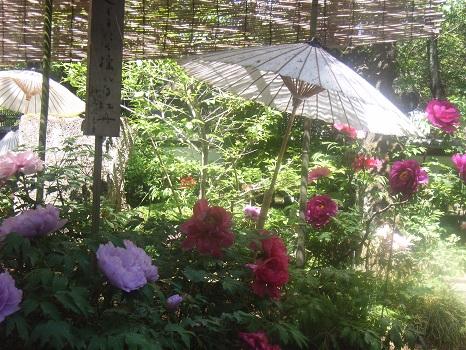 201104上野牡丹園4