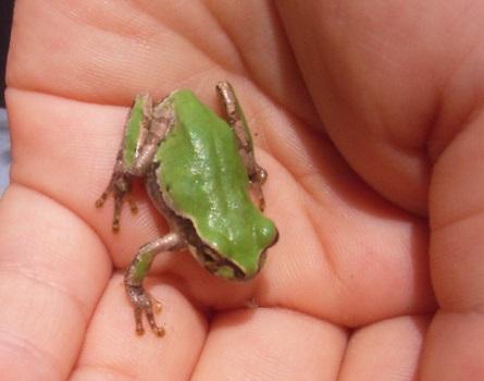 七十二候が「蛙始鳴」。気づけば不思議と眠くないかも?/旧4/10・己卯