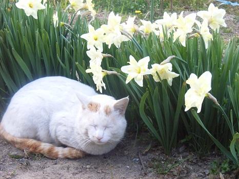 春がどうしようもなく眠いのは、カエルに目を貸したからです。/旧3/17・丁巳