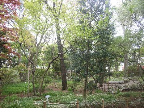 201104牧野庭園1