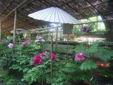 201104上野牡丹園3