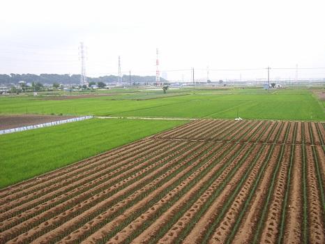 20080628水戸街道の畑