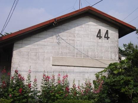 20080611阿佐ヶ谷住宅のタチアオイ2