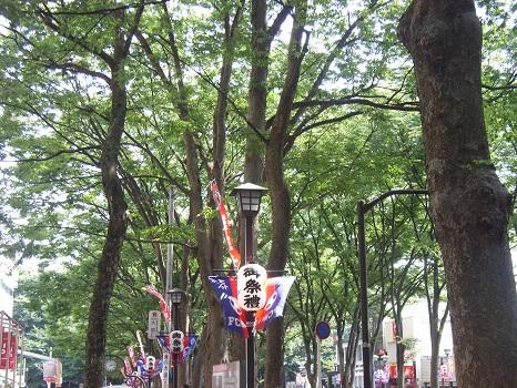 今日は、府中・大國魂神社すもも祭りへ。いや、暑い&雹降ったら怖いしで、やっぱりエア参拝になり候。/旧暦・閏5/27・戊申