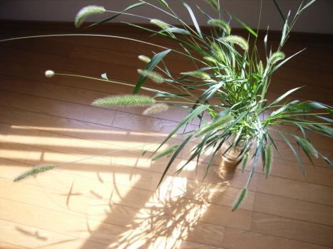 七十二候「土潤溽暑」の日々に、雑草を飾る。堂々と/旧7/2・庚子
