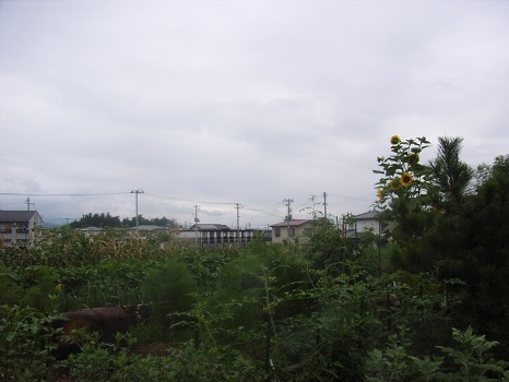 お盆の時期の東北の畑