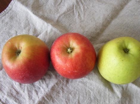 七十二候は「地始凍」。凍らないので勝手に「林檎実(りんごみのる)」/11/13=旧 閏9/21・戊子