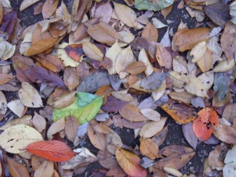二十四節気の「小雪」を迎え、天気予報の「今年いちばんの寒さ」が日々更新されはじめる時期到来です。/11/22=旧10/1・丁酉