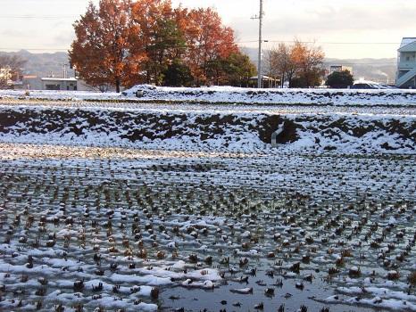 たんぼに雪