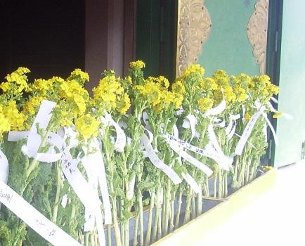 今日は、天神さまの祥月命日。亀戸天神では菜の花で供養「菜種御供」が執り行われます。/2/25=旧1/7・壬申