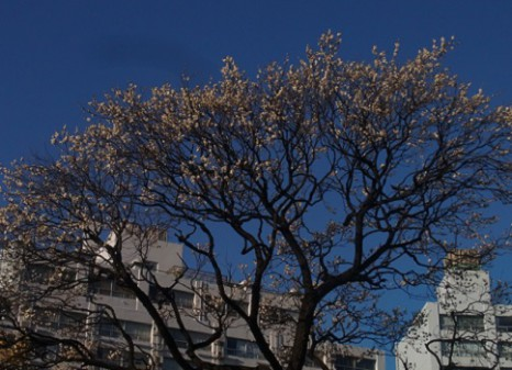 2月3日の梅