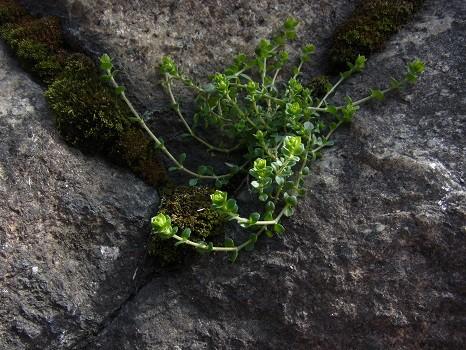 コンクリートの草