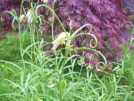 雨の日の草