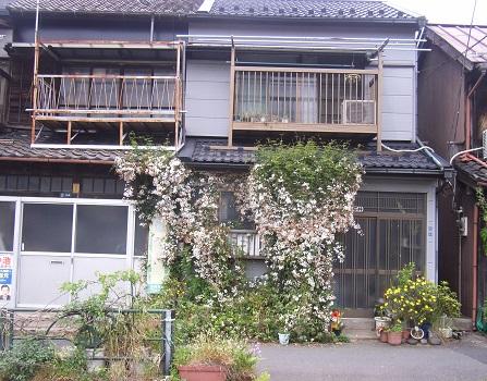 初夏の花地図アイテム、ジャスミン!今年は早々と咲きおわりつつあるみたい/5/12=旧3/24・戊子