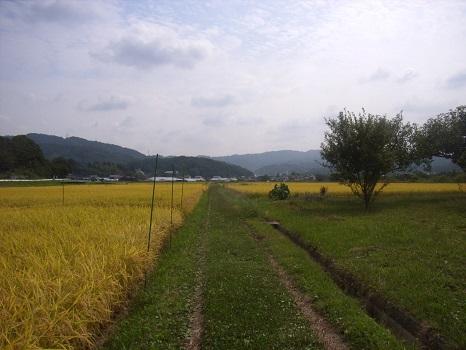 故郷の田んぼ