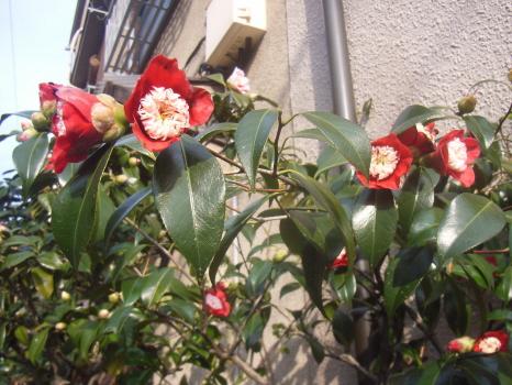 2011年3月11日のこと:桜消える