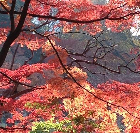 後楽園の紅葉