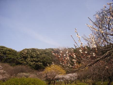 しばしの間、桃源郷をお楽しみください。…って、梅ですが😊。/旧暦1/5・丁丑