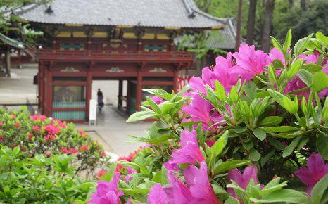 根津神社のつつじまつり。早咲き、中咲き、遅咲きと楽しむのがツウ...。今年も結局中咲きから。/4/26=旧4/1・癸未・新月