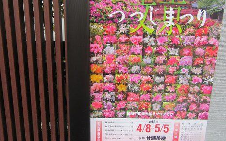 躑躅(つつじ)に、文目(あやめ)、藤に...あっ!桜草っ!忙しすぎる初夏までの花追い。/4/22=旧3/26・己卯