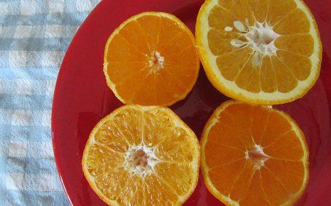 来たよ、来たっ!春柑橘の旬!やーっと、春みかんの季節っ!/4/18=旧3/22・乙亥
