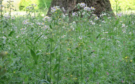 ゴールデンウィークの間に草燃ゆる? 行く道、立ち寄る公園...、東京でも、なんか、雑草が生き生きしてます。/5/11=旧4/16・戊戌・満月!