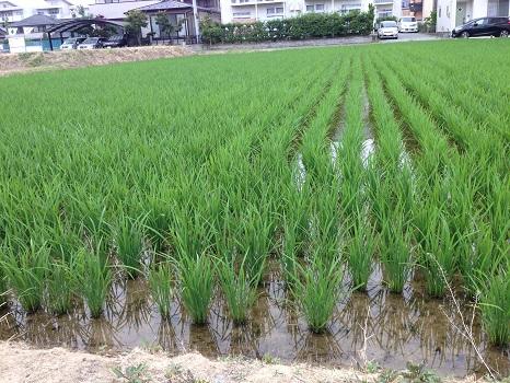 福島の田んぼ