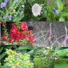 七草の夏バージョンも復習。「雨の七草」「夏の七草」「梅雨の七草」…どう名付けても草が似合う季節はいまごろだと思う。/旧暦5/7・癸未