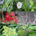 楽しかったんで、勝手に探した「雨の七草」の復習というかまとめというか。/7/11=旧・閏5/18・己亥