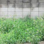 七十二候は「土潤溽暑」に。見るからに暑さを纏ったコトバにイメージするのは雑草天国。/旧暦6/6・丙辰