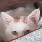 今日は、招き猫の日。ってことで、猫を招いた猫と、招かれた猫を。/旧暦8/10・己未
