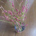 秋の名残の「犬蓼(いぬたで)」の花。一度たくさん採って飾ってみたく、元気のよいところを虎視眈々と!初冬になって、やっと!/旧暦9/23・壬寅