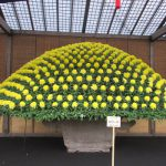 新宿御苑の菊まつり「菊花壇展」は、やっぱりいいわぁおススメです。が、あらら?もう今日までかぁ…。/11/15=旧9/27・丙午