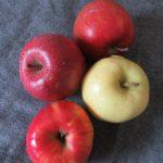 12月の声を聞いたら、りんごが安くなった?ふじに、ジョナゴールド、トキに、再び紅玉、ひとつずつ買う楽しみ😊/12/1=旧10/14・壬戌