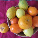 師走も押し迫って、まだまだ冬柑橘の旬。たとえばレモン、ライムとか。冬至の日の柚子とか。/旧暦11/9・丁亥・上弦