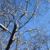 今日は二十四節気「大寒」=寒さの底。ここを抜ければ春まじかと寒さ対策に気合を入れます。で「酒粕」GET!/旧暦12/4・壬子