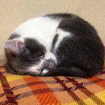 今日は「猫の日」だそうで…。由来は、「ニャン(2)ニャン(2)ニャン(2)」だからだそうで…。まあ、可愛いから良しとします。/旧暦1/7・乙酉