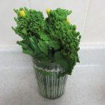 突然やってきた「菜の花」飾りたい気分!で、今年も、花屋さんを素通りし、八百屋さんの「菜の花」を飾る。/旧暦1/12・庚寅