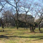 今日は二十四節気「啓蟄」。というので、動き出した蛙などを探しに行くも…。声だけ聴いて満足して帰る in 小石川植物園/旧暦1/19・丁酉