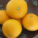 春柑橘の旬には、1種類ずつ食べたい。…がばら売りされないので「清見」ひとやま。/旧暦2/27・甲戌