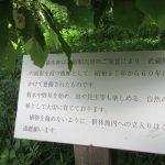 初夏の休暇は皇居の庭の雑木林からスタート。だって、今日は「昭和の日」だしね。/旧暦3/14・辛卯