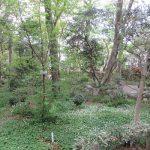 植物学の日は、牧野富太郎博士の誕生日。なので、いそいそと博士の庭「牧野記念庭園」へ。/旧暦3/9・丙戌