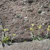 今日は「みどりの日」。ってことで、石垣の花あしらいを…何それ?/旧暦3/19・丙申