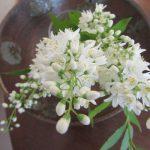 今日から旧暦4月で卯月・卯の花を。そして、それを眺めつつ新月ノートを。/旧暦4/1・丁未