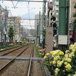 カラッと晴れた初夏の日に念願のバラを見に。都電荒川線の日常を彩るバラを。/旧暦4/9・乙卯