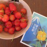今日は太宰治の誕生日にして逝った日「桜桃忌」。サクランボ食べつつ、太宰ワールドを一冊紐解く。/旧暦5/6・壬午