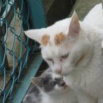 「招き猫の日」の今日は、恒例!母の家に招いた猫と招かれた猫…のその後を。/旧暦8/20・甲子