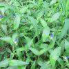 七十二候は「草露白」に。「白露」と並んで強調⇒草地の白露を見たい⇒行く⇒あっ!そこに、青い「露草」発見っ!。/旧暦8/1・乙巳・新月!