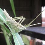 七十二候は「蟋蟀在戸」に。いや、東京は、いきなり寒いもんで、秋の虫は戸口どころか、もう気配すらないですが😞。/旧暦9/11・甲申